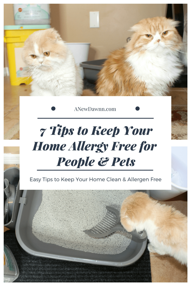 7 Ways to Keep Your Home Allergy Free for People and Pets
