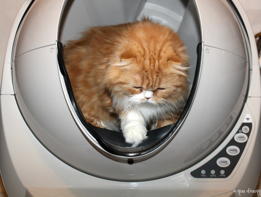 Cat stepping out of the Litter Robot