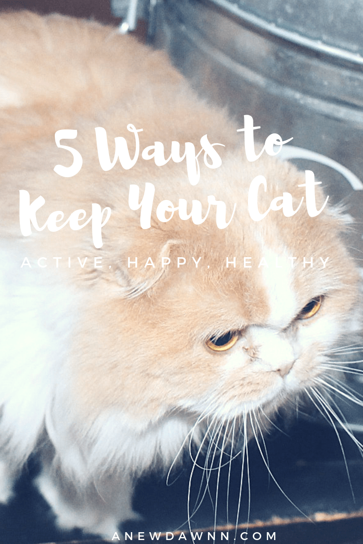 5 Ways to Keep Your Cat Active, Healthy and Happy