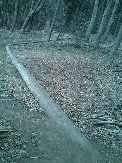 wood_line