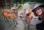 deer adventures in japan