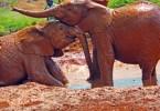 elephants ringling brothers