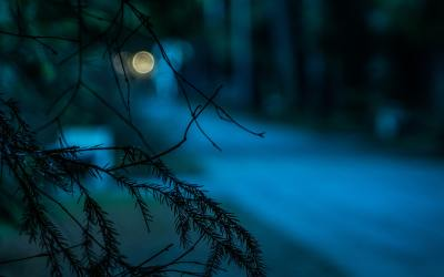 Night Time Walks in the Woods