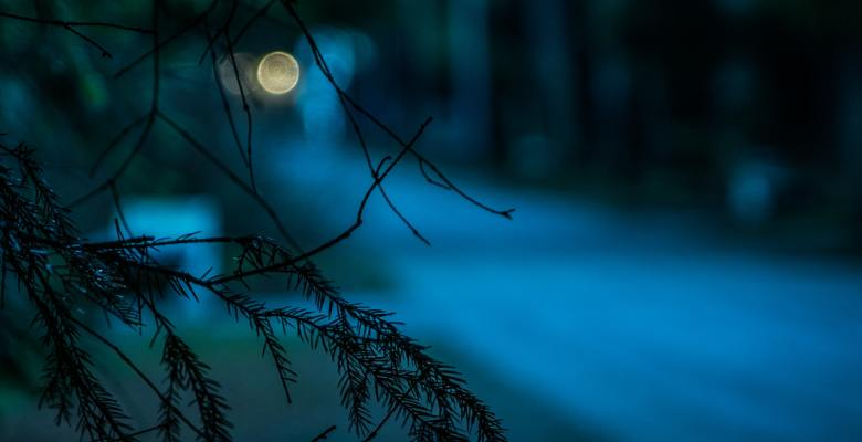 night time in the woods