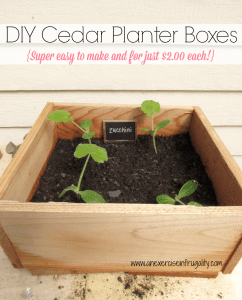 Cedar Planter Boxes for Square Foot Gardening