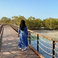 Jubail Mangrove Park | Abu Dhabi