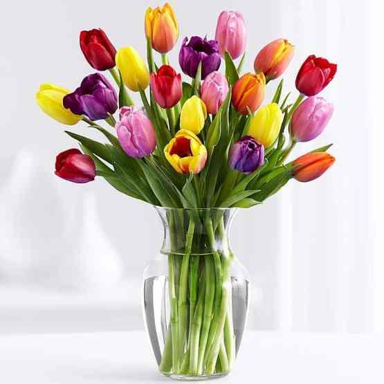21 Разноцветный Тюльпан