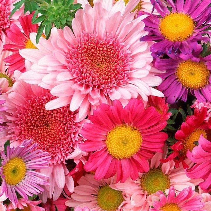 Подписка на цветы Стандарт
