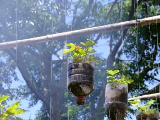 Nossa plantação suspensa de morangos ®SKLindemann