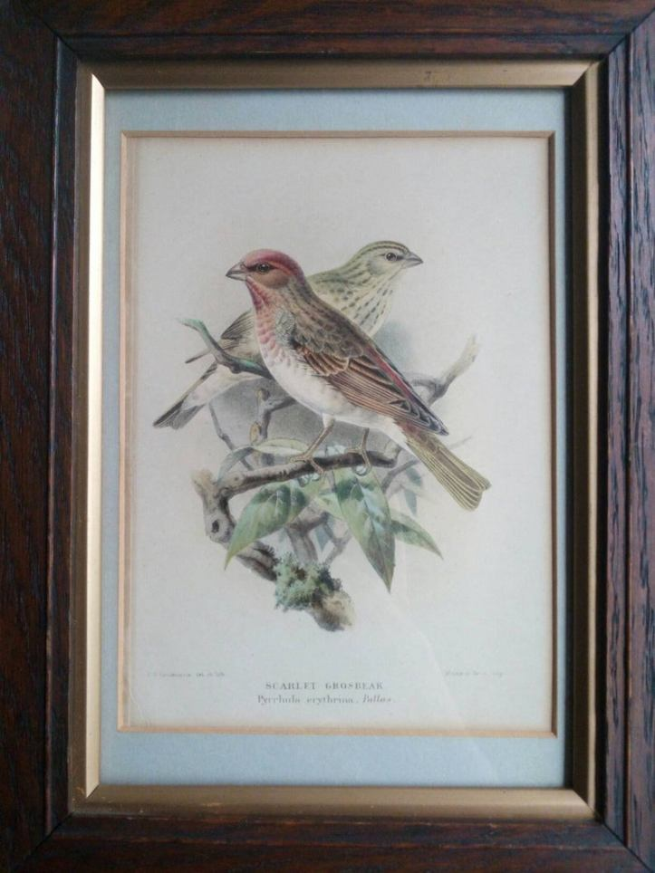 Antique framed bird print