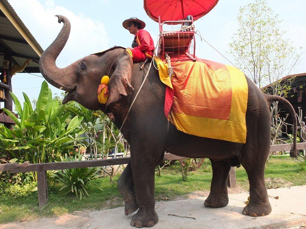 La elefanti