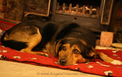 Jasper in front of the fire