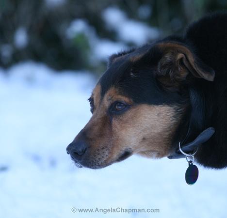 Jasper snow head