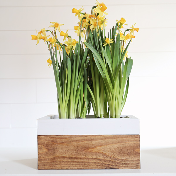 DIY spring planter box