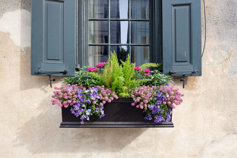 purple and pink flower window box ideas from Charleston