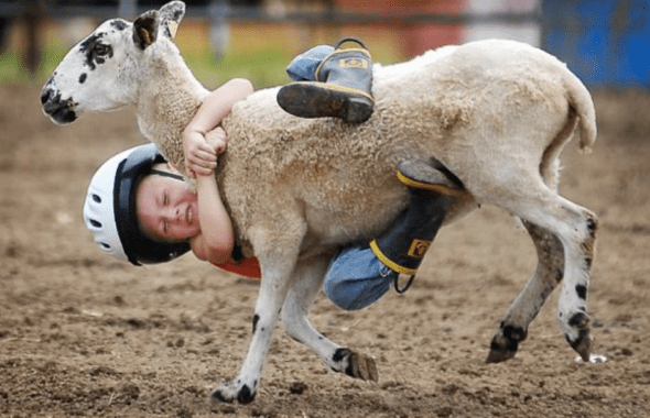 A white kid in a helmet falling off after trying to ride a goat in a goat rodeo. In this metaphor, the goat is 2020 and we are all the kid.