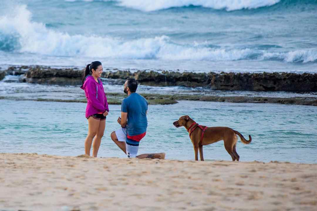 man proposing with his dog on maui
