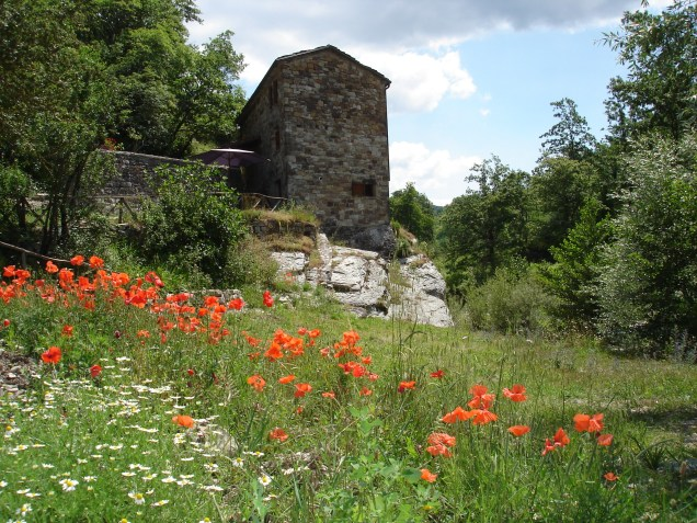 poppies beneath the mill