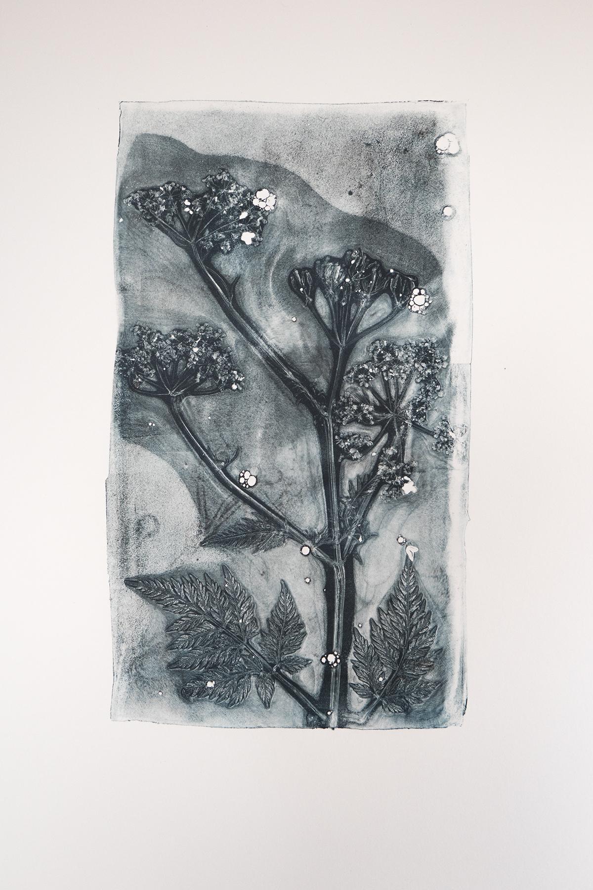 fluitenkruid, bloemen Leafprint Black blue, Natuurlijk Angelart, Angela Peters. Illustraties gelatineprint