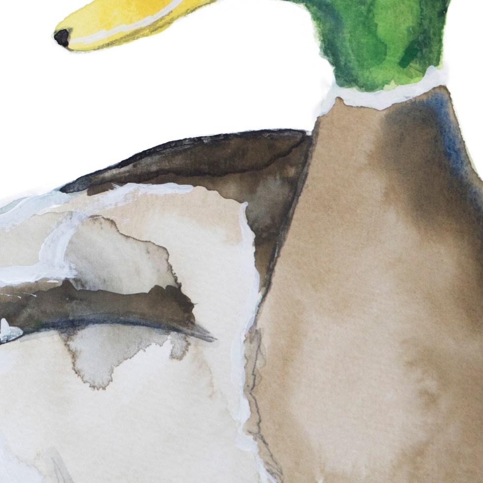 eend illustratie Angela Peters, NatuurlijkAngelart