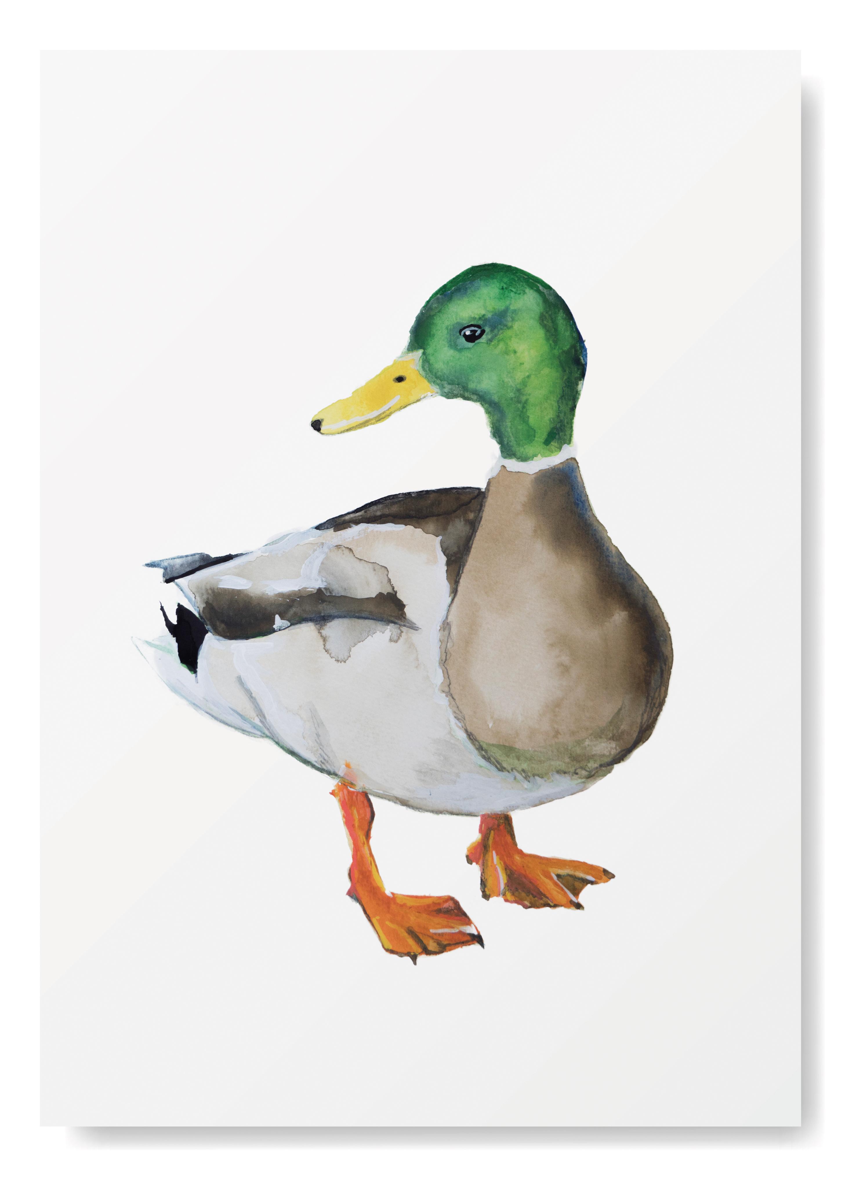 Angela Peters illustratie, dieren kaarten Angelart Kunst&zo kunst eend