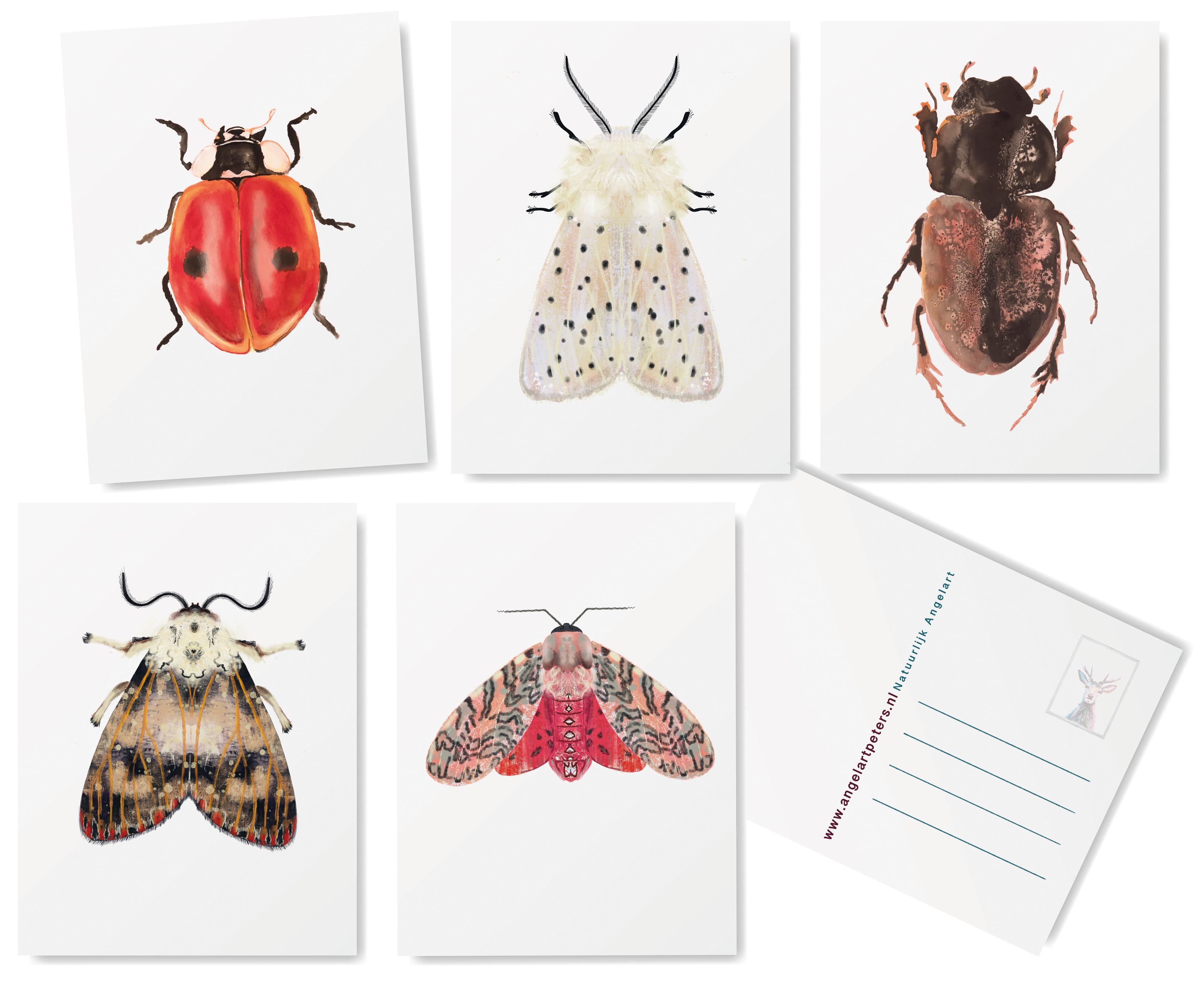Angela Peters illustratie, dieren kaarten Angelart Kunst&zo kunst insecten