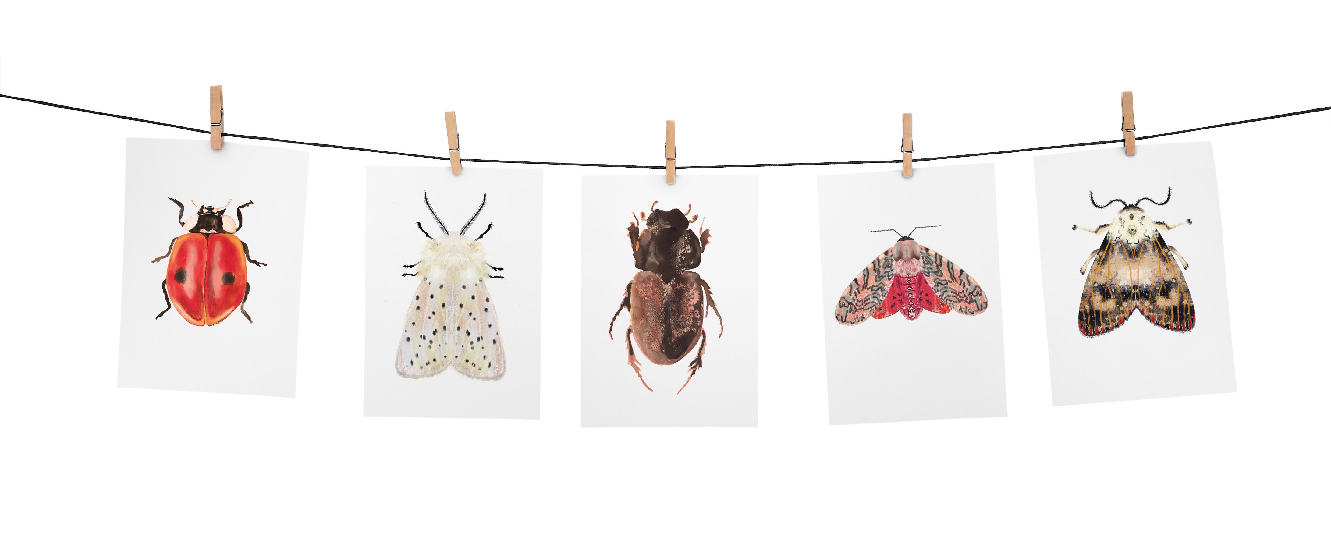 Angela Peters illustratie, dieren kaarten Angelart Kunst&zo insectenposter mot