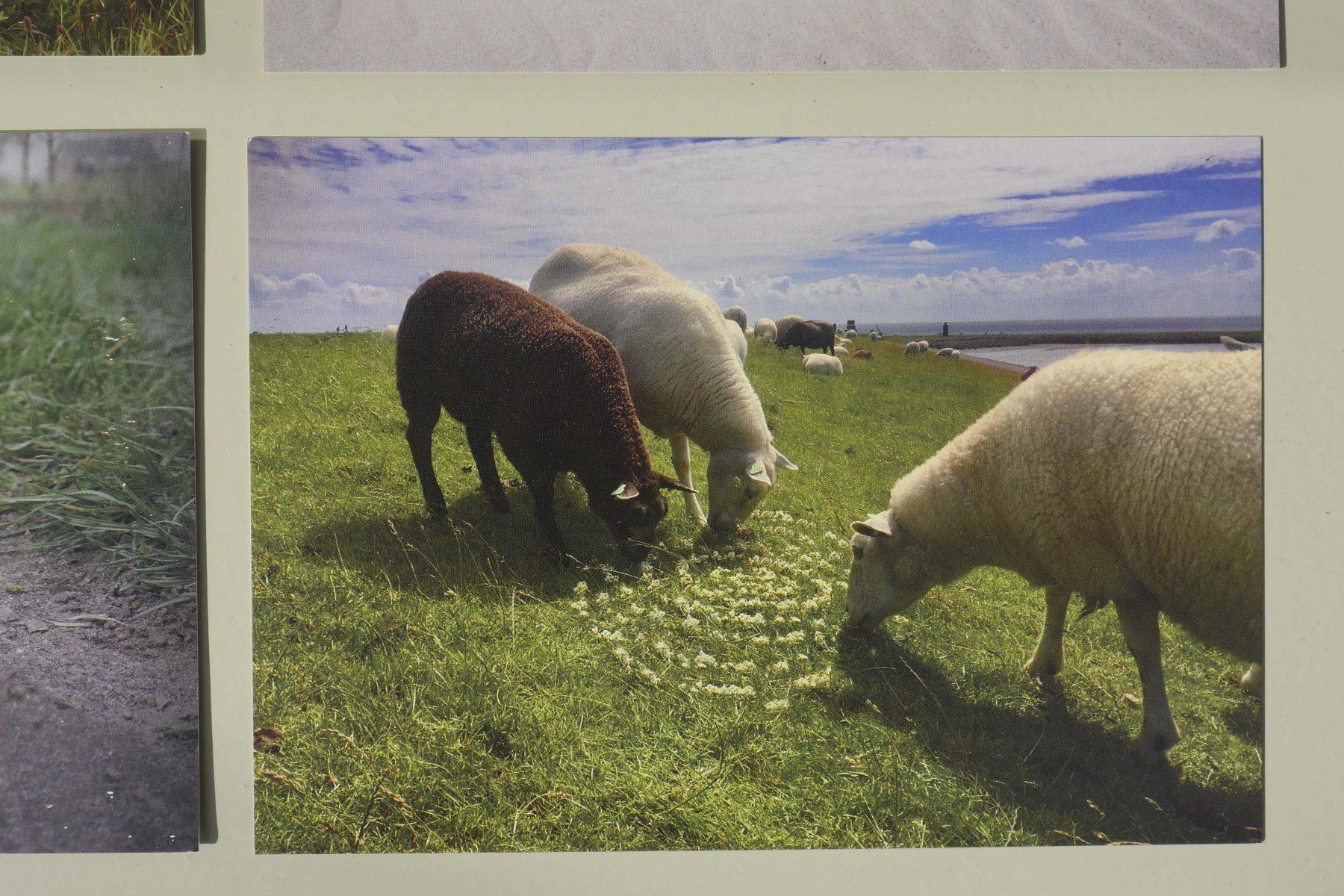 landart Mies Heerma kaarten bij Angelart kunst&Zo Angela Peters