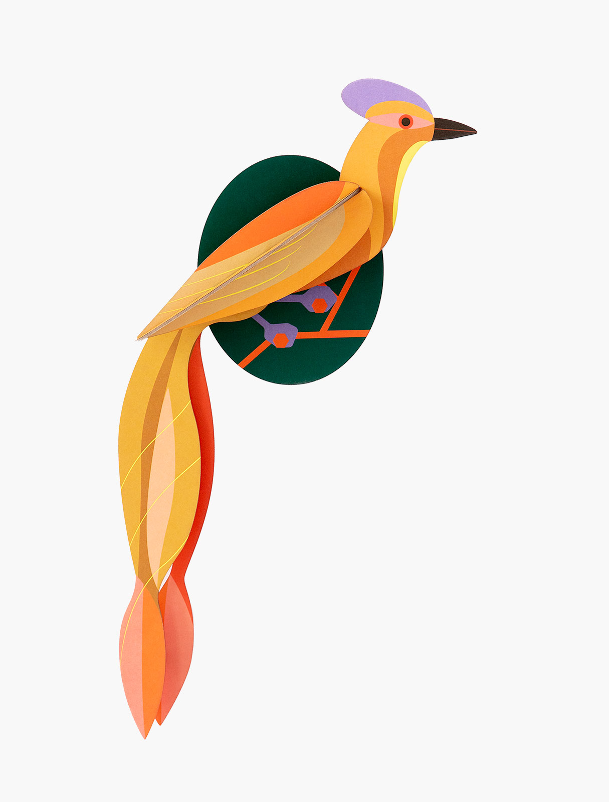 Paradijsvogel Olango