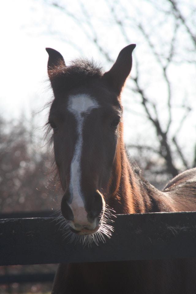 Hayzle 3 yr old Mustang