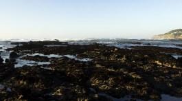fitzgerald_marine_reserve