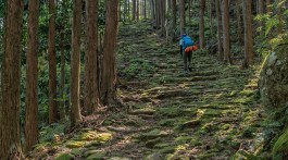 Kumano Ancient Road