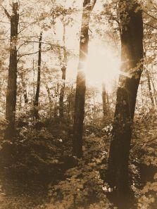 dsc04604-sugar-forest-1