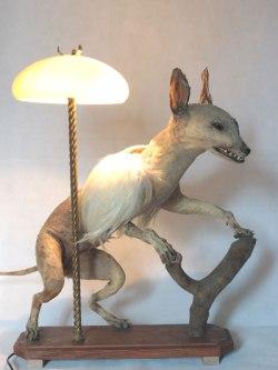 Chimère renard ailé, empaillé et dépoilé, avec plumes et verrerie.