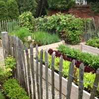 vegetable garden inspiration