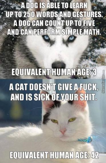 dogs-vs-cats_c_6446431