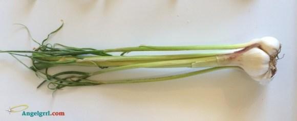 20140325-green-garlic-fm