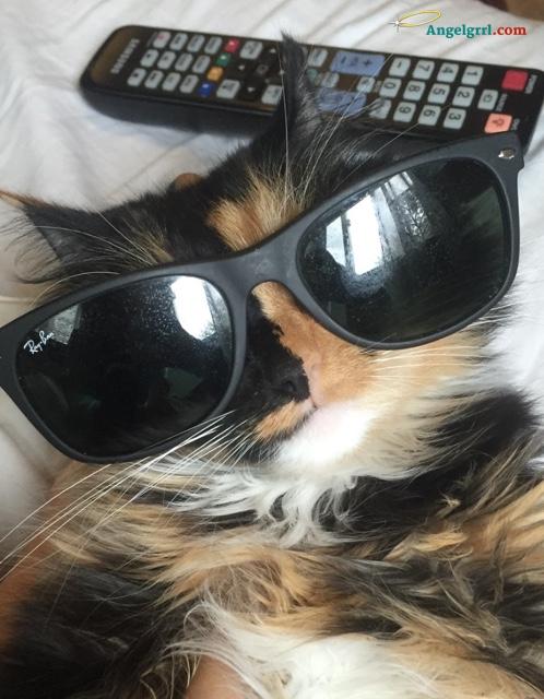 20150609-cool-cat
