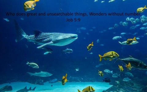 Bible verse of the day Job Zephaniah 1 John Psalms