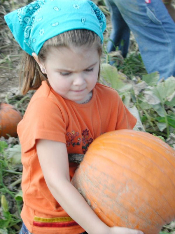 Pick Gourds and a Pumpkin on our Fall Field Day