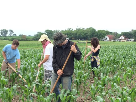 Hoeing corn can be done more or less efficiently (speed). Quality is determined by the percentage of weeds destroyed vs the percentage of corn that is nicked. Volume (yield) increases according to how well the weeds are controlled. (Trevor, Austin, Chris and Katie above.)