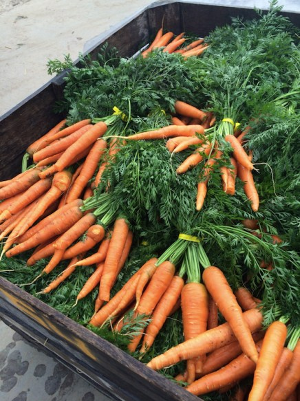 Our carrots last week