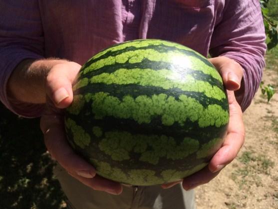 watermelon glory