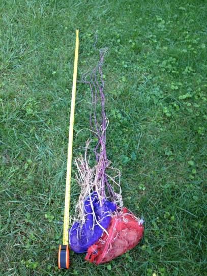 long, lovely(?), curly potato shoots