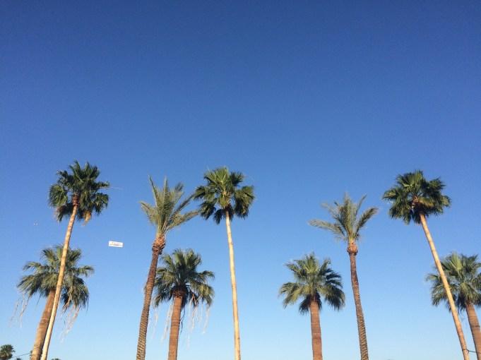 palm trees coachella