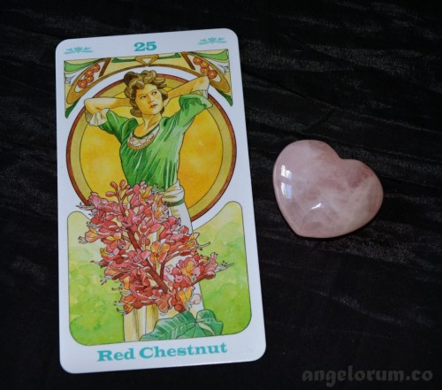 Red Chestnut Bach Flowers Oracle