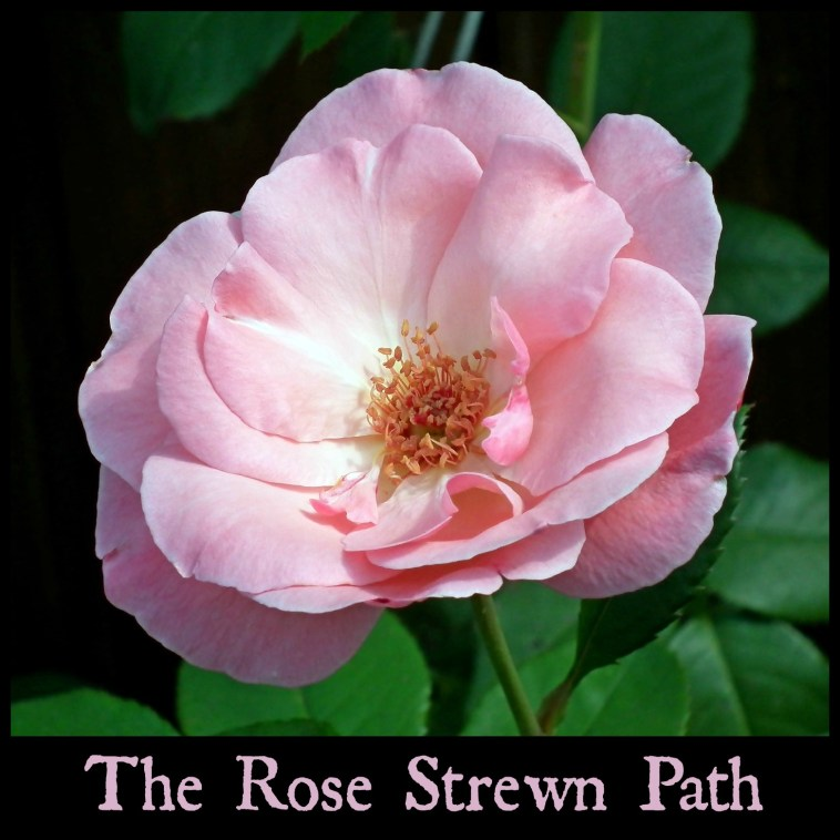 Episode 0 The Fool - The Rose Strewn Path Podcast