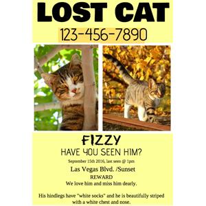 lostcat - ANGEL PAWPRINT-Compassionate Pet Loss Grief