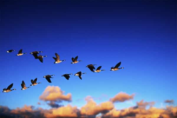 Bandada de aves