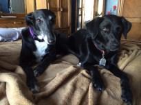 Cleo & Luca 2